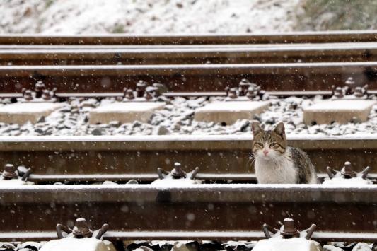 Çankırıda kar kartpostallık görüntüler oluşturdu