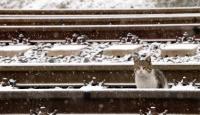 Çankırı'da kar kartpostallık görüntüler oluşturdu