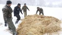 Bolu Dağı'na yılkı atları için yem bırakıldı