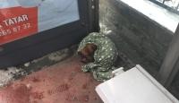 Soğukta otobüs durağına sığınan köpeğe vatandaşlar sahip çıktı