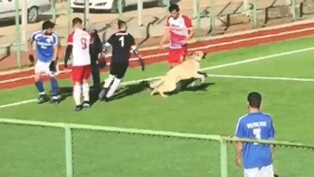 Maç esnasında sahaya giren köpek hareketleriyle taraftarları güldürdü