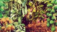 Türkiye 2019'da 5 bin 500 ton tropikal meyve ihraç etti