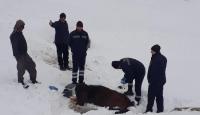 Hakkari'de donmak üzere olan sahipsiz at kurtarıldı