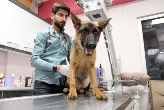 Şiddete maruz kalan yavru köpek İtalya yolcusu