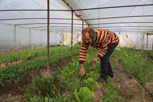 Ata tohumuyla serada organik sebze üretimi