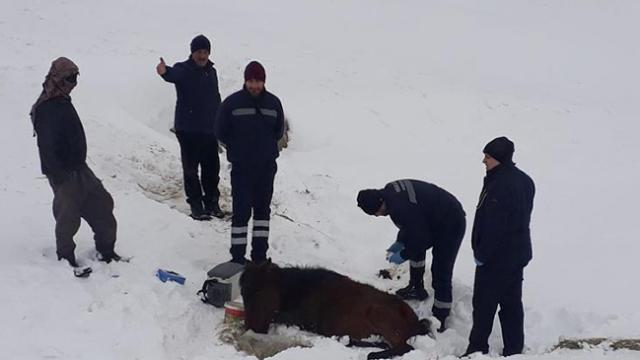 Donmak üzere olan atı belediye ekipleri kurtardı