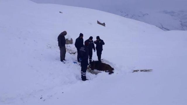 Hakkari'de soğukta ayakları donan at kurtarıldı