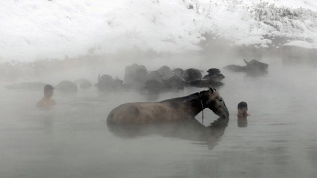 Manda ve atların kaplıca keyfi yoğun ilgi görüyor