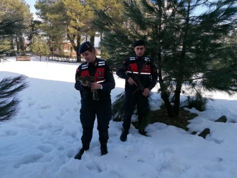 Jandarma ekiplerinin bulduğu yaralı doğan koruma altına alındı