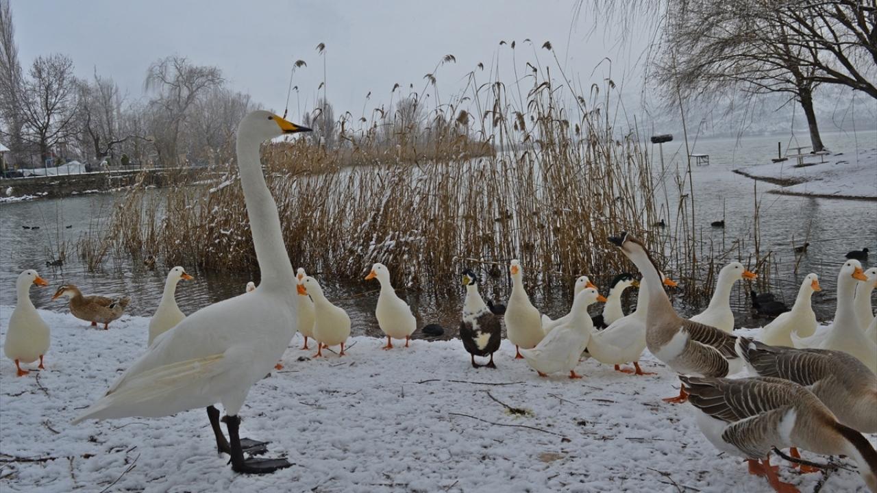 Gölbaşı Gölleri Tabiat Parkı'nda kış güzelliği