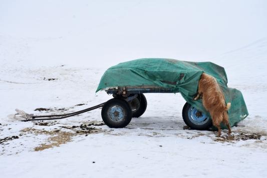 Besiciler hayvanları için kar üstünde kızak ve eşek arabasıyla yem taşıyor