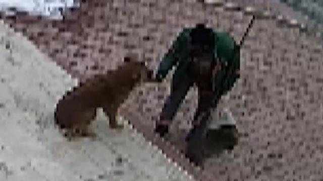 Sokak köpeğiyle temizlik görevlisinin sıcak karşılaşması