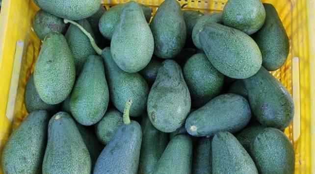 Akdeniz Bölgesindeki çiftçiler avokadoyu sevdi