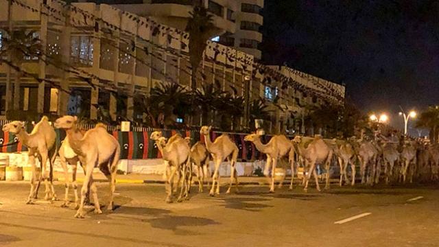 Hafter'in saldıları sonrası binlerce deve Trablus Limanı'ndan tahliye edildi