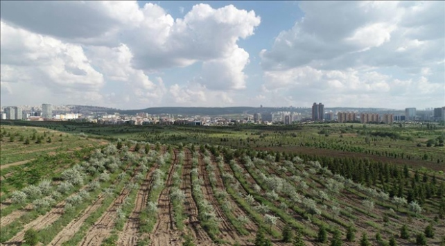 Hükümlüler üç yılda 2,5 milyona yakın fidanı toprakla buluşturdu