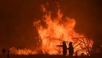 Yangınlar Avustralya'daki ormanların beşte birini yok etti