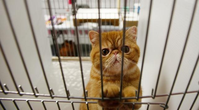 Hong Kongdaki evcil hayvanlara koronavirüs karantinası