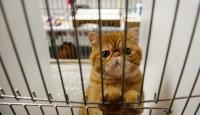 Hong Kong'daki evcil hayvanlara koronavirüs karantinası