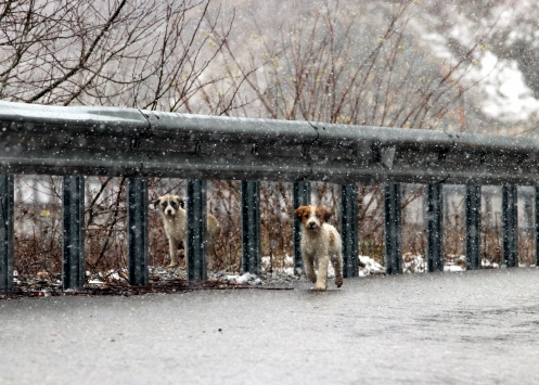 Kırklarelinin yüksek kesimlerinde kar yağışı başladı