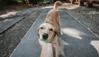 Veteriner hekimlerden uyarı: Hayvanlarla yakın temastan kaçının