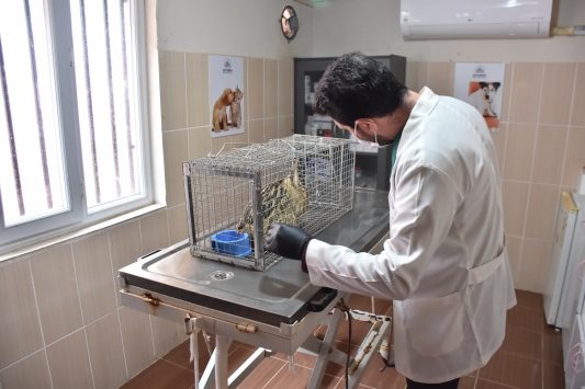 Adıyamanda yaralı bulunan balaban kuşu tedavi edildi
