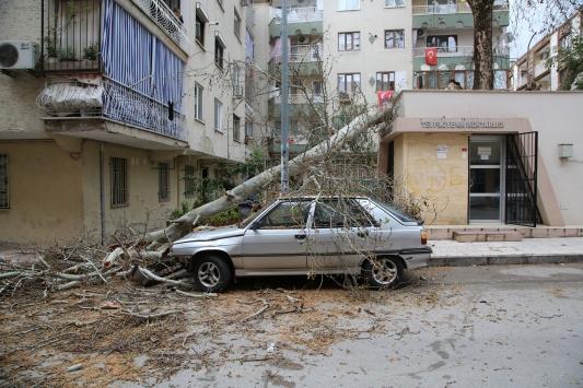 Manisada asırlık çınar ağacı muhtarlık binası ve otomobilin üzerine devrildi