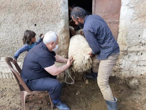 Tel Abyadda tarım ve hayvancılık canlanıyor