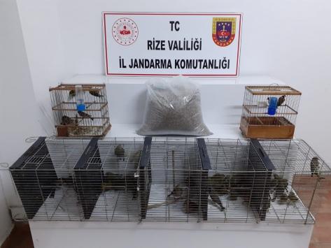 Rizede koruma altındaki kuşları evinde besleyen kişiye 47,3 bin lira ceza