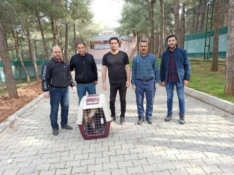 Şanlıurfada tedavi edilen kızıl akbaba doğaya bırakıldı