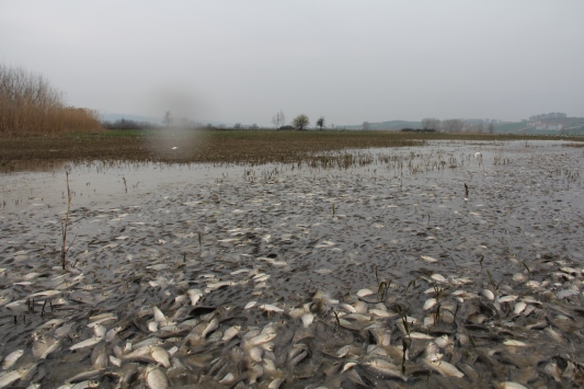 Bursada baraj sularının çekildiği tarladan balık topladılar
