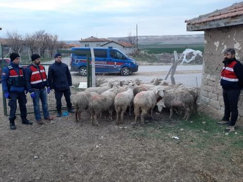 Ankarada küçükbaş hayvan hırsızlığı: 3 tutuklu