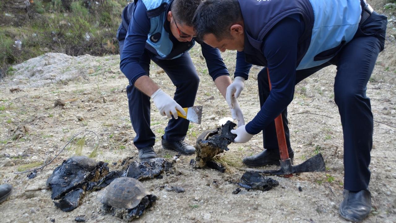 Muğlada ziftte hareket etmekte zorlanan köpek ile 5 kaplumbağa kurtarıldı