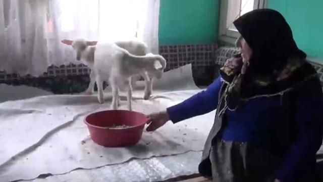 112'yi aradı, kuzularına yem istedi
