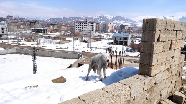 Hakkaride inşaatta mahsur kalan 2 köpeği belediye ekipleri kurtardı