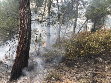 Dursunbeyde çıkan orman yangını söndürüldü