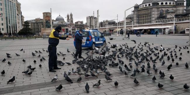 Zabıta sokakta yaşayan hayvanları yalnız bırakmadı