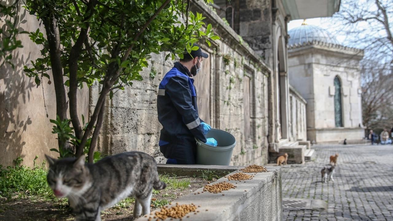 İstanbulda hayvanlara belediyeler sahip çıkıyor