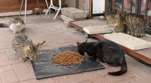 Sokak hayvanları için mama desteği sağlandı