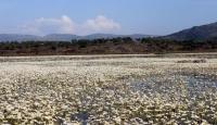 Hatay'daki volkanik gölü su papatyaları sardı