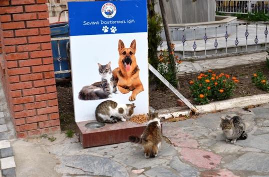 Ezine Belediyesi sokak hayvanlarını yalnız bırakmadı