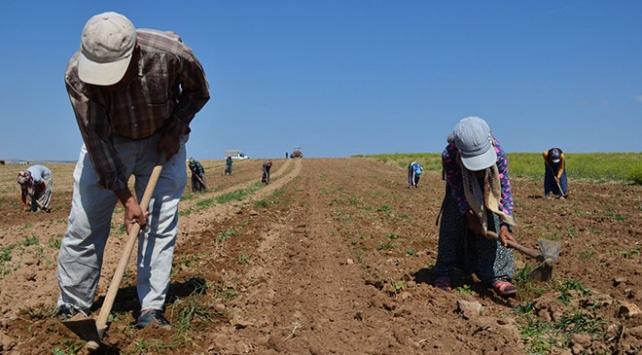 Mevsimlik tarım işçileri için koronavirüs tedbirleri
