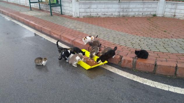 Kocasinan Belediyesi sokak hayvanlarını unutmadı