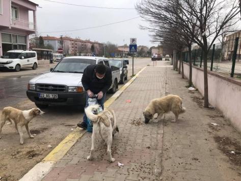Süloğlunda sokak hayvanları belediye tarafından besleniyor