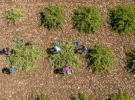 Hazineye ait tarım arazilerinin kiraları 6 ay ertelendi