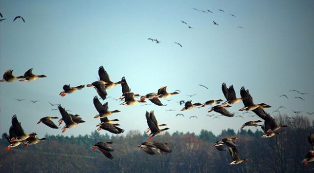 ABDde yasa değişikliği ile milyarlarca kuş ölebilir
