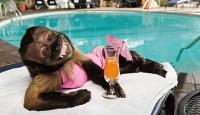 Hollywood'un En Zengin Maymunu