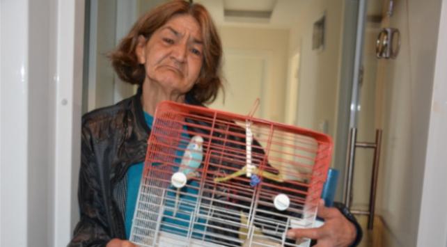 Yaşlı kadın belediyeden muhabbet kuşu istedi