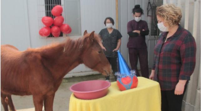 Hayata tutunan yılki atına doğum günü sürprizi