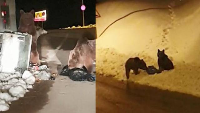 Aç kalan ayılar çöp konteynerlerinde yiyecek aradı