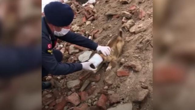 Zor durumdaki köpeği jandarma kurtardı